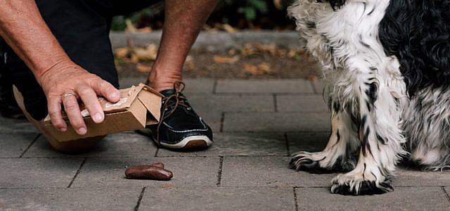 Hundekotbeutel Alternative
