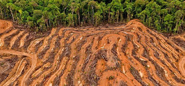 Palmöl Urwald Rodung