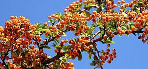 M lltrennung recycling 13 fakten die wichtigsten tipps for Obstfliegen in pflanzen