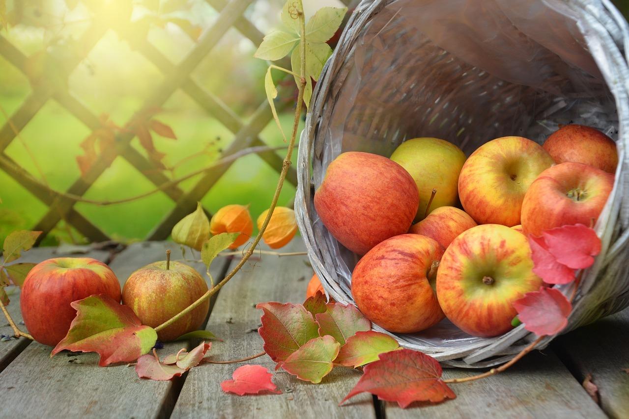 Von August bis Oktober ist Apfelsaison.