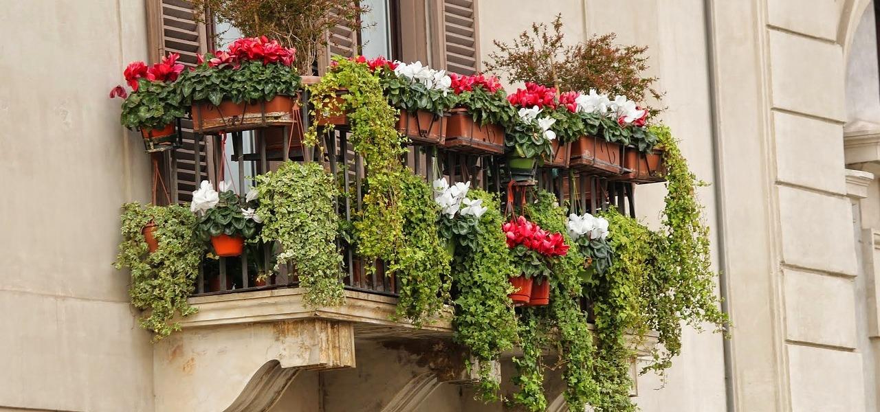 Winterharte Balkonpflanzen Diese Gewächse Sind Immergrün Utopia De