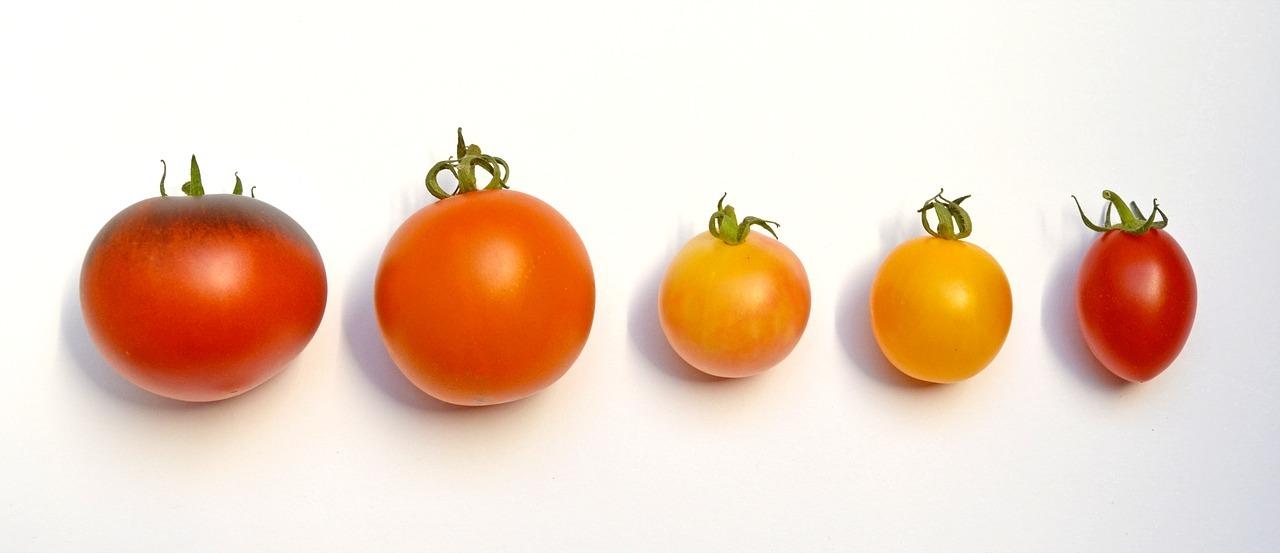 alte tomatensorten f r mehr vielfalt und geschmack. Black Bedroom Furniture Sets. Home Design Ideas