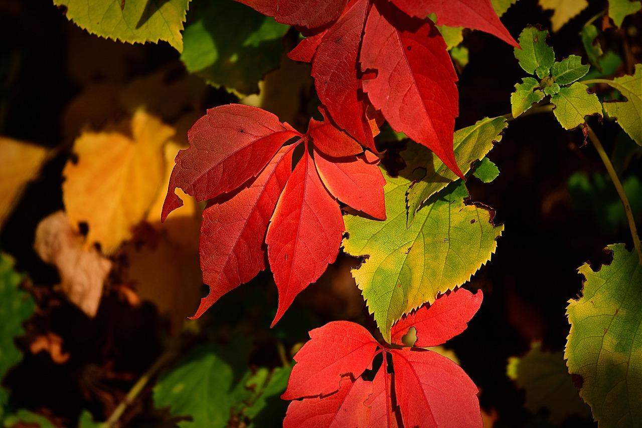 Auf den Bäumen sehen Herbstblätter schön aus – wenn sie auf deinen Rasen fallen, solltest du sie aber unbedingt zusammenrechen.