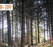 Doku-Tipp Die Ausbeutung der Urwälder