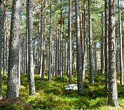 Ecosia pflanzt Bäume durch Suchanfragen