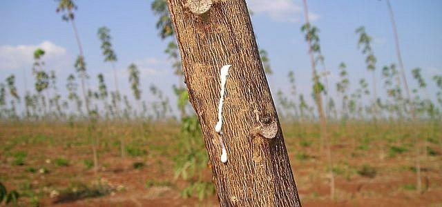 naturkautschuk