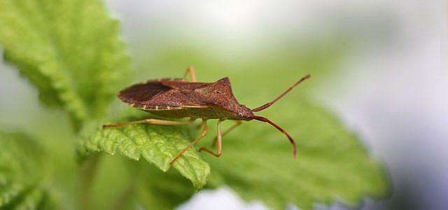 Wanzen im haus was du gegen die wanzenplage tun kannst - Was tun gegen insekten im zimmer ...