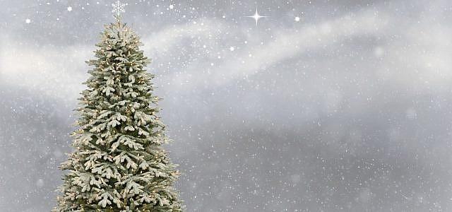 weihnachtsbaum selber schlagen