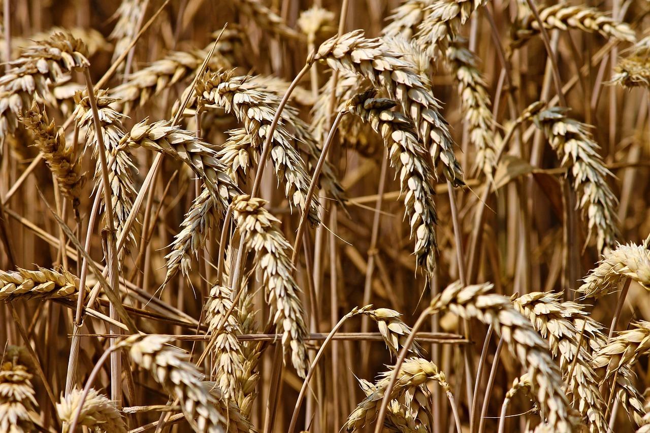 Couscous besteht aus Getreide-Grieß, meistens Weizen
