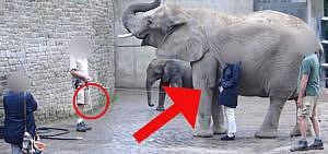 Elefanten Zoo Peta