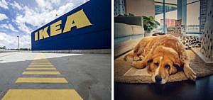 Ikea Hunde Filiale