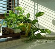 Pflanze fürs Badezimmer