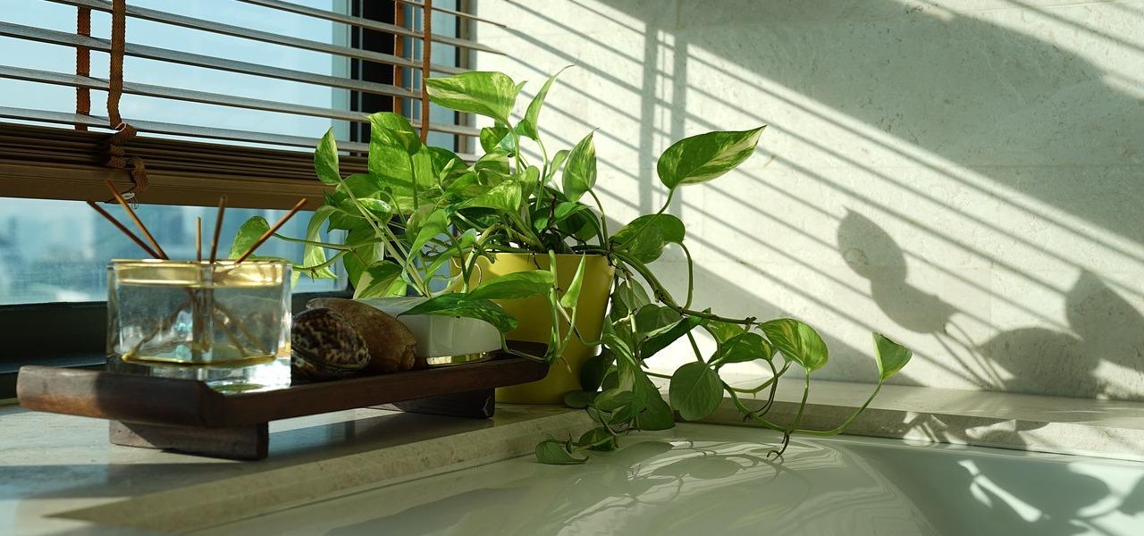 pflanzen f rs badezimmer diese eignen sich besonders gut. Black Bedroom Furniture Sets. Home Design Ideas