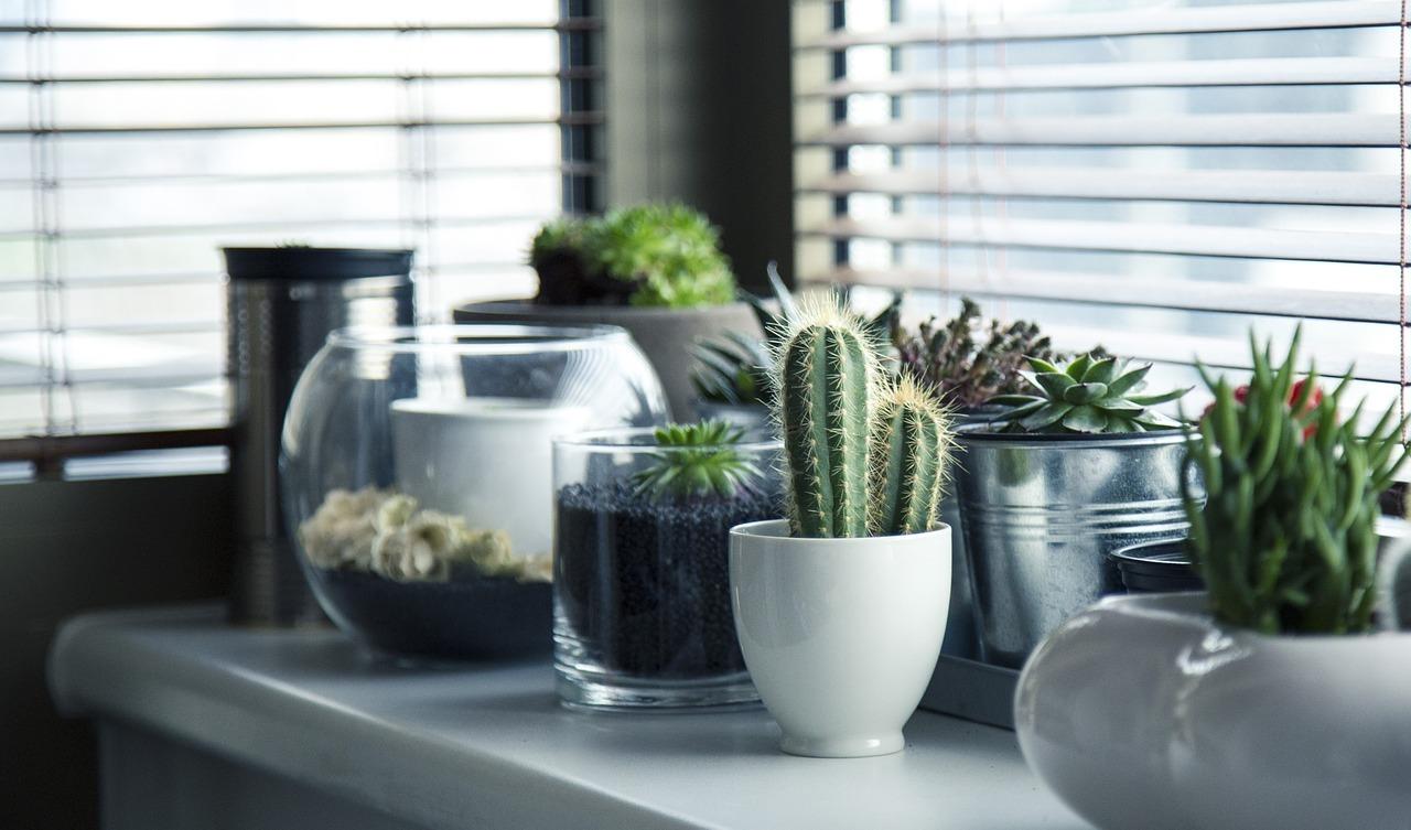 Pflanzen Fürs Badezimmer Diese Eignen Sich Besonders Gut Utopiade