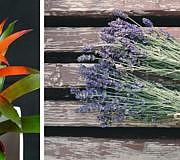 Pflanzen, die für Wohlbefinden sorgen