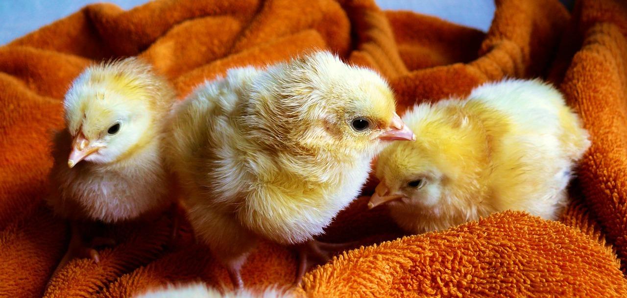 Primaloft kommt auch ohne tierische Produkte aus.
