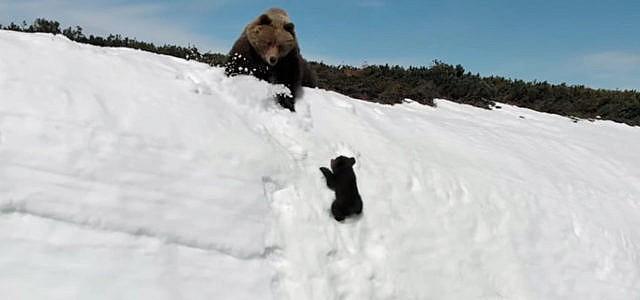 Viraler Hit Bärenkind
