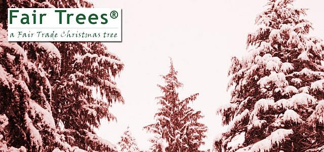 Faire Weihnachstbäume Fair Trees