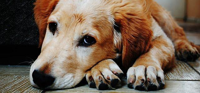 Hund abgeben