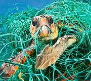Meeresmüll: Keine Schildkröte ohne Plastik