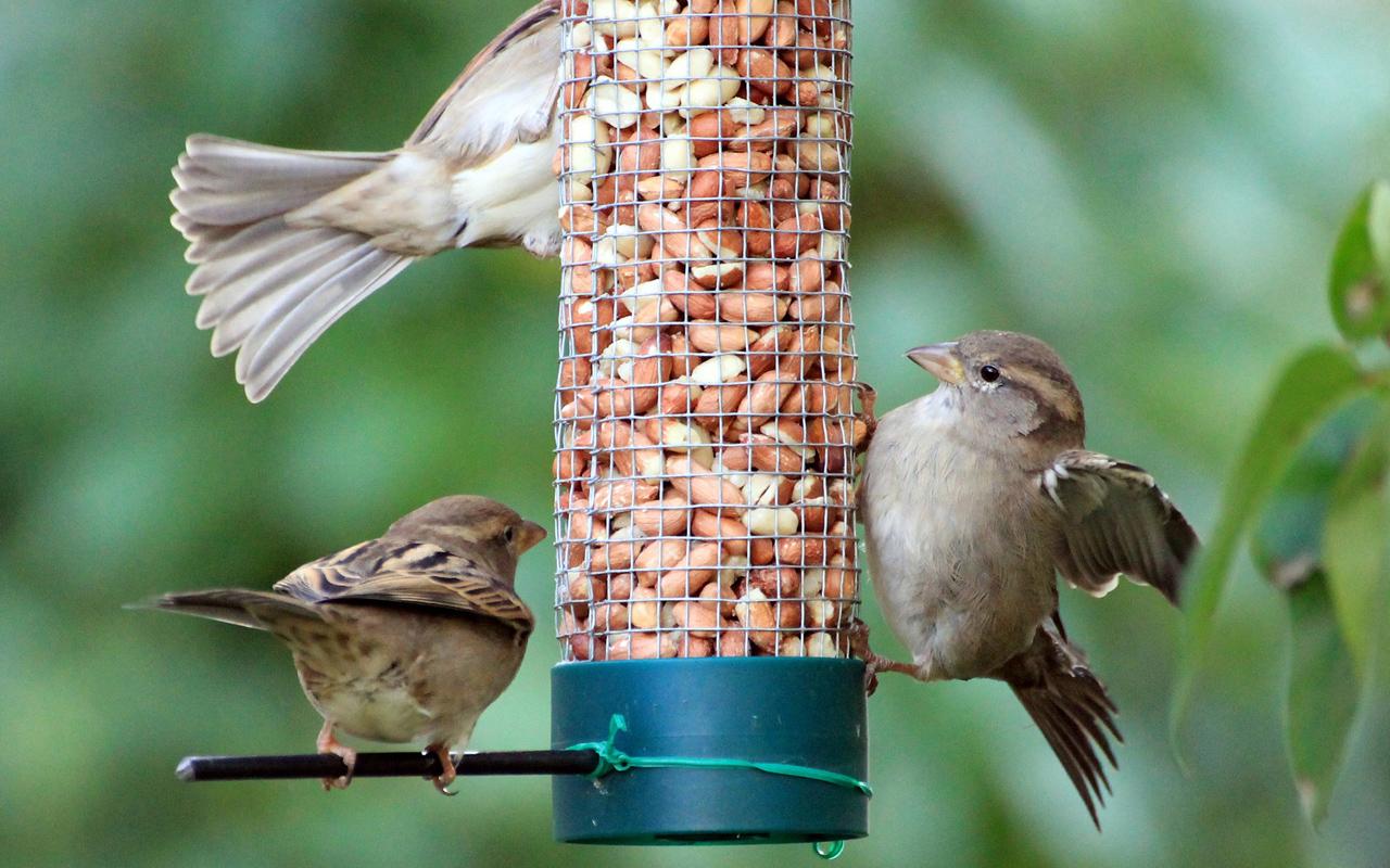 Vogel Futtern 10 Wichtige Tipps Utopia De