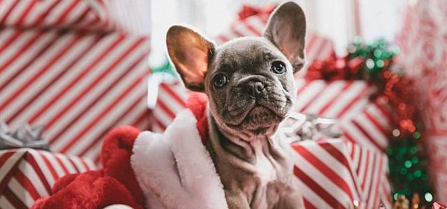 Weihnachten Haustiere verschenken