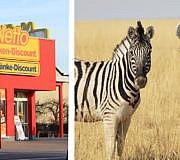 Zebra Netto Steak Fleisch