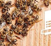 Volksbegehren gegen das Bienensterben
