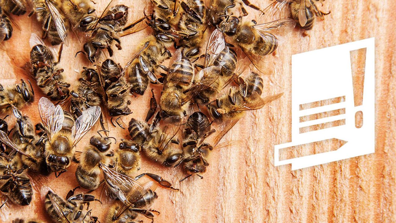 Bienen Volksbegehren: Jetzt Wollen Die Nächsten Bundesländer Ein Volksbegehren