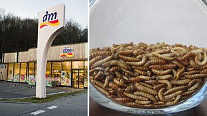 dm, Drogerie, Insektennudeln, Insektenpasta