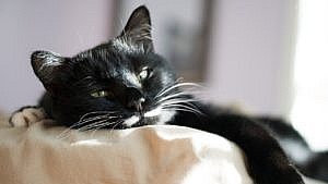 Katze entwurmen