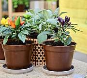Hanfi kompostierbarer Pflanzentopf von meinwoody