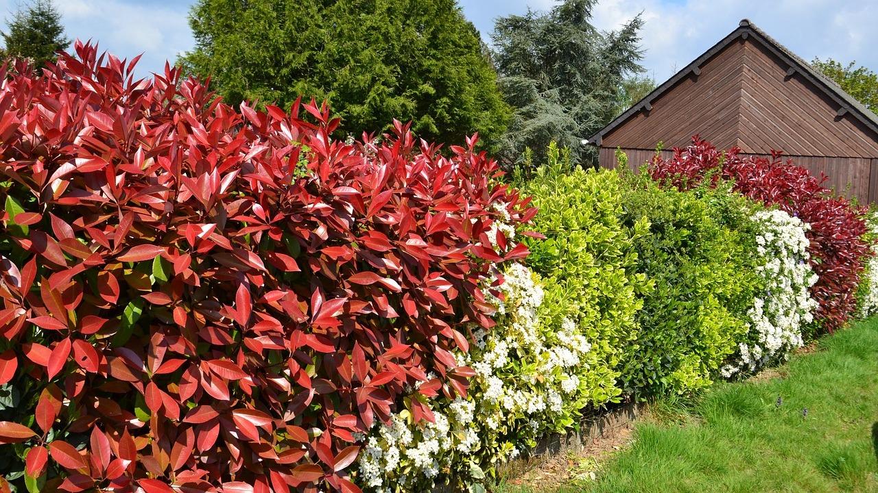 Hecken Pflanzen Diese Heckenpflanzen Fordern Die Artenvielfalt
