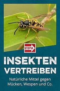 Insekten vertreiben: Natürliche Mittel gegen Mücken, Wespen und Co.