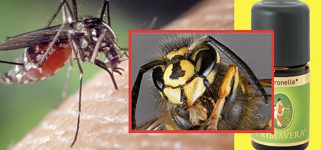 Insekten-vertreiben