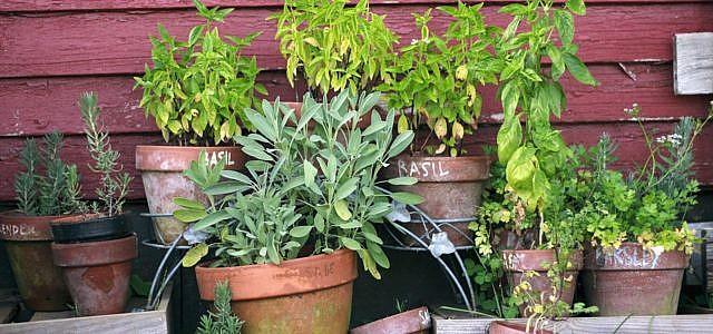 kräuter anpflanzen