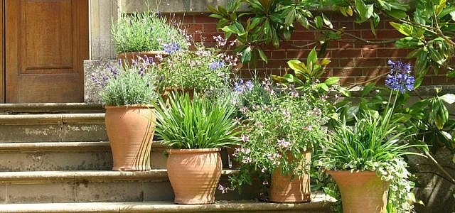 Mediterrane Pflanzen im Topf