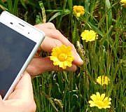 Pflanzen per App bestimmen
