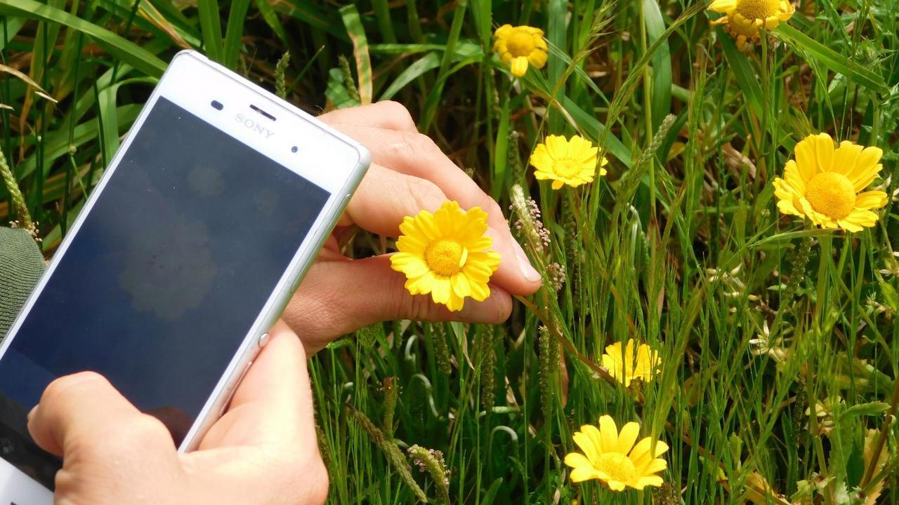 Top Pflanzen per App bestimmen – die besten Tools - Utopia.de #OK_65