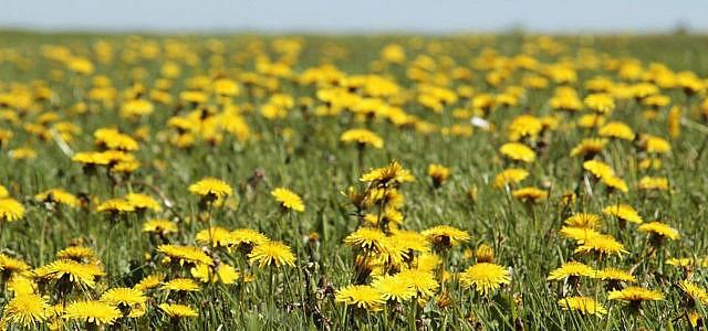 wildblumen wildblumenwiese