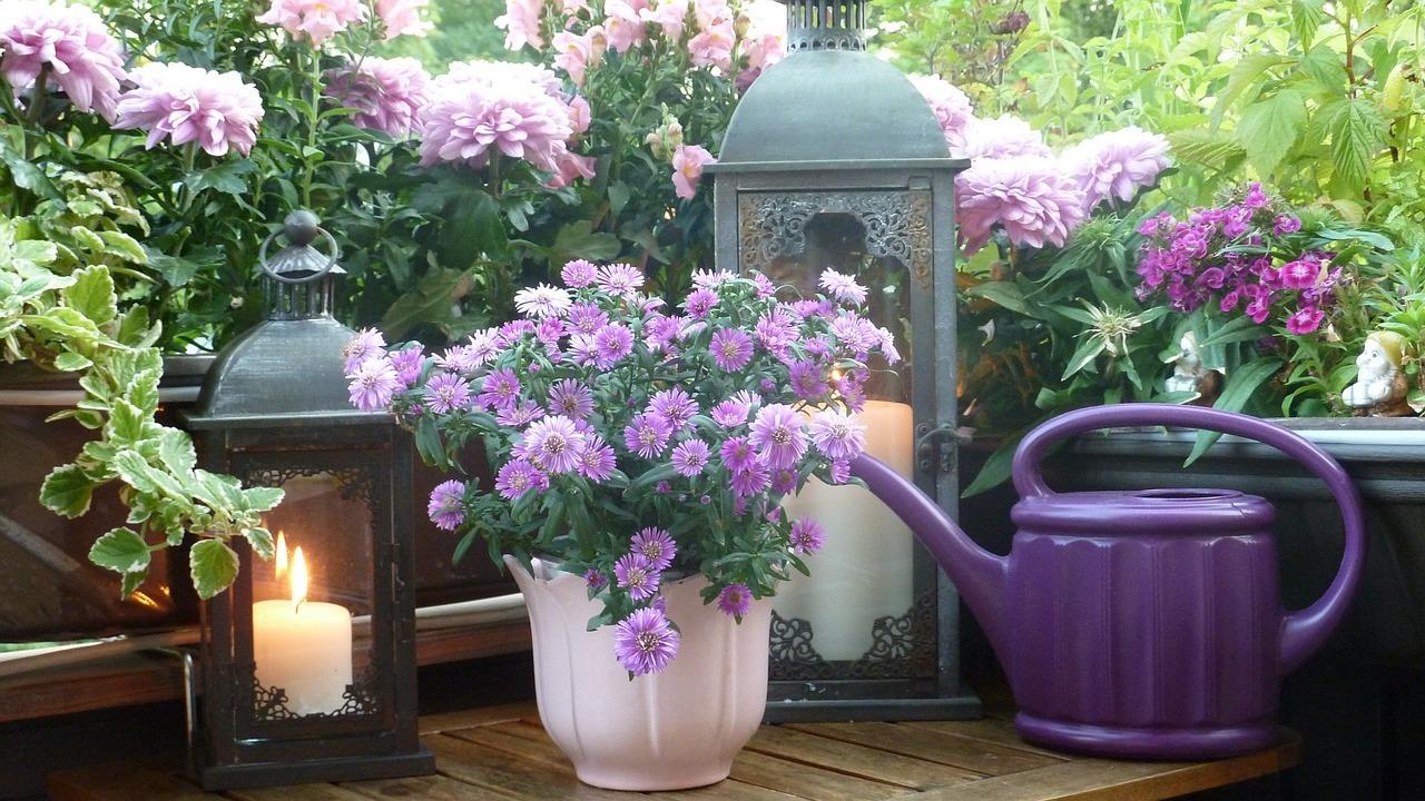 Etwas Neues genug Balkonpflanzen: Pflegeleichte Sorten für sonnige und schattige #PE_11