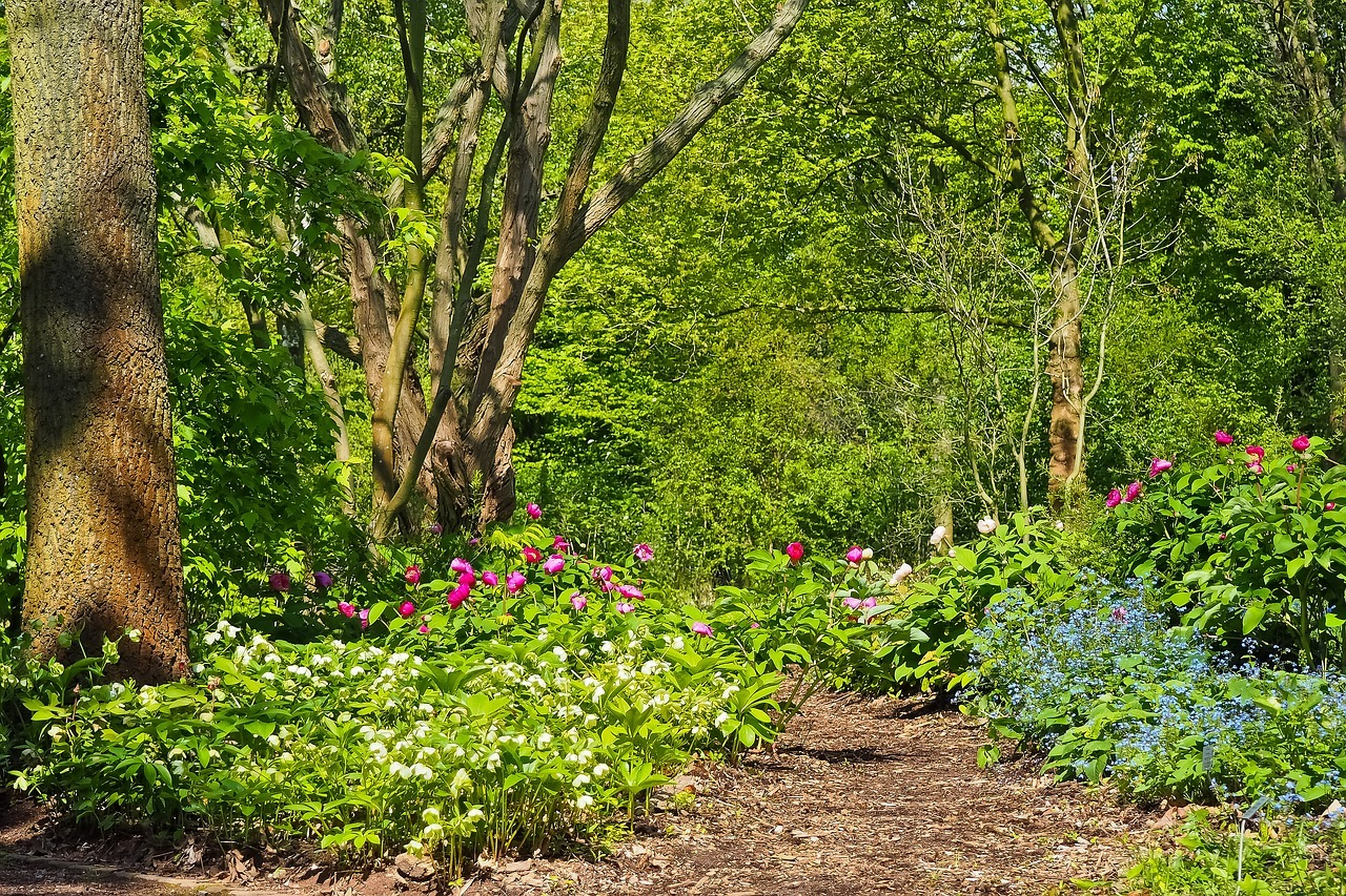 Vogelfreundlicher Garten Das kannst du zum Erhalt der ...