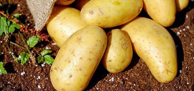 Kartoffeln grillen