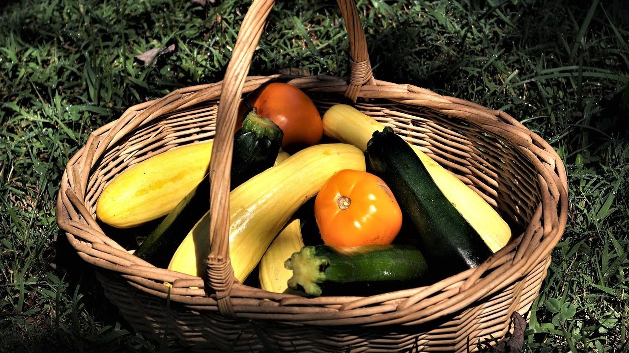Etwas Neues genug Zucchini pflanzen: So pflegst und erntest du das Gemüse selbst &IA_28