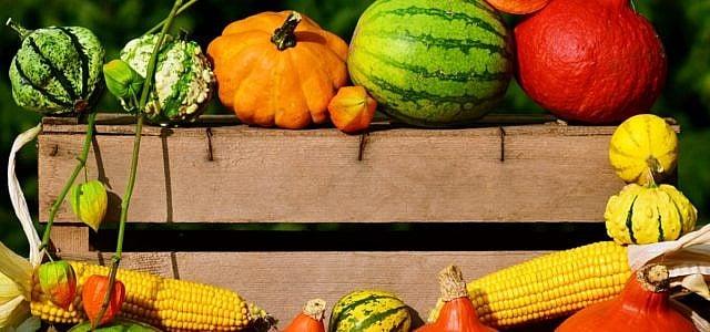 Biokiste Ökokiste Gemüsekiste Obstkiste