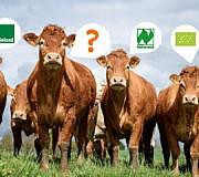 Bio-Siegel: Was haben Tiere von Bio-Tierhaltung?