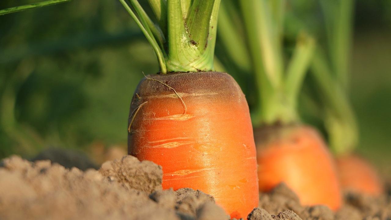 Karotten und ihre Nährwerte Vitamine, Kalorien und mehr   Utopia.de