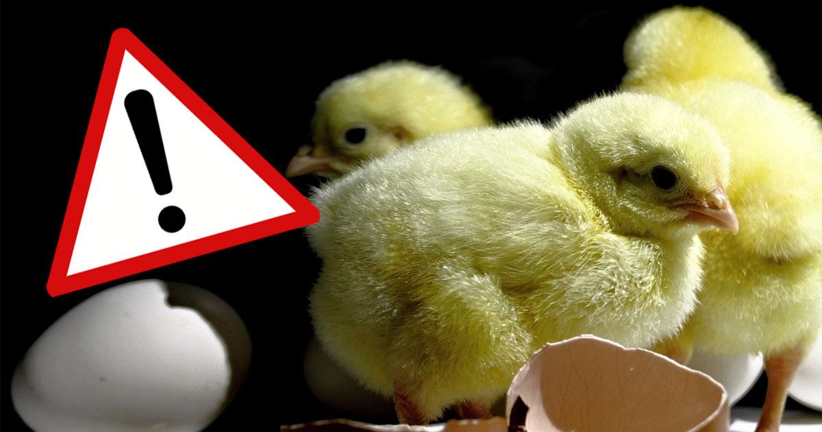 Gro-er-Supermarkt-Check-Hier-gibt-s-Eier-ohne-K-kenschreddern