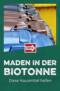 Maden in Biotonne: Diese Hausmittel helfen