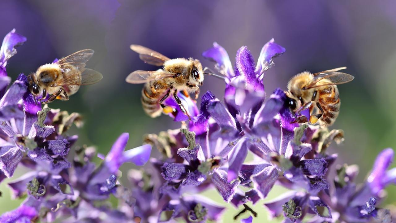 Den Insekten zuliebe: Diese Pflanzen solltest du nicht pflanzen - Utopia.de